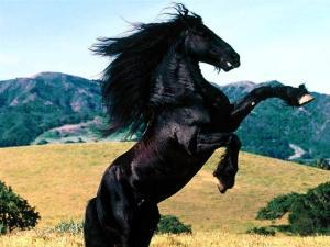 cavalo_negro-7393